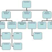 Por que ter um bom organograma empresarial?